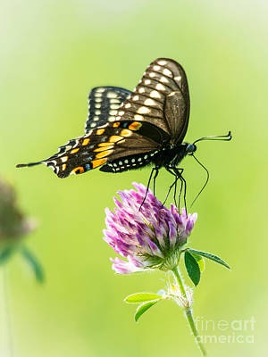 Photograph - Butterfly Perfection by Cheryl Baxter