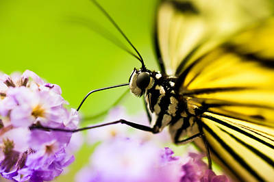 Bug Photograph - Butterfly by Sebastian Musial