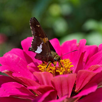 Dog And Butterfly Photograph - Butterfly by Skip Willits