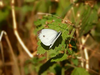 #butterfly #nature Original by Vahan Hovhannisyan