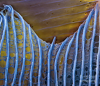 Color Enhanced Photograph - Butterfly Wing Scale Sem by Eye of Science