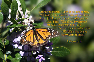 Butterfly With Scripture Print by Linda Phelps