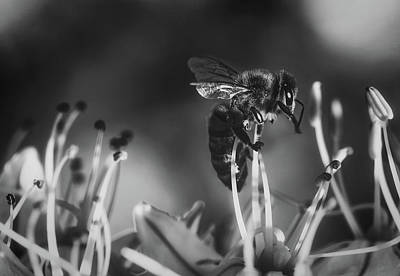 Photograph - Bzzz by Michael Siebert