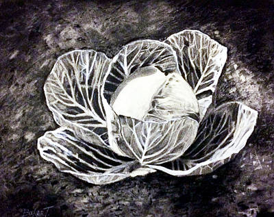Cabbage Drawing - Cabbage by Booker Poole