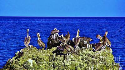 Photograph - Cabo Pelicans by John Wartman