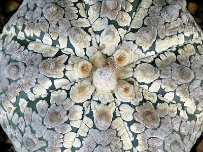Photograph - Cactus 2 by Selena Boron