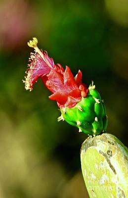 Photograph - Cactus Blossom by Craig Wood