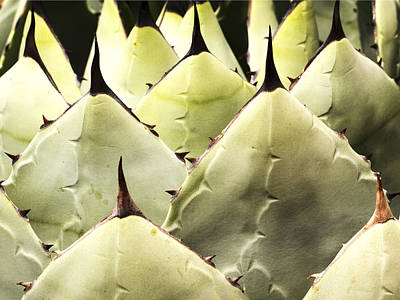 Photograph - Cactus Pattern by Jean Noren