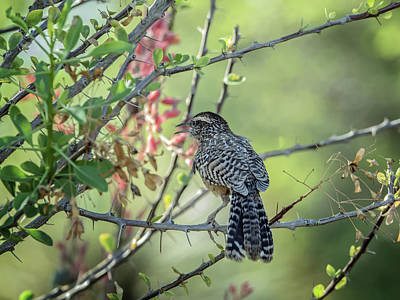Photograph - Cactus Wren 3270 by Tam Ryan