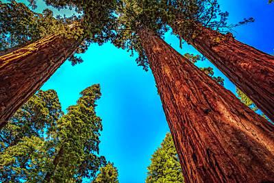 Photograph - Calaveras Big Tree State Park by LeeAnn McLaneGoetz McLaneGoetzStudioLLCcom