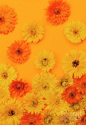 Calendula Flowers On Orange Background Art Print by Elena Elisseeva