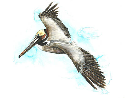 Painting - California Brown Pelican by Cindy Hitchcock