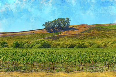 California Vineyard In Napa Valley California Art Print by Brandon Bourdages