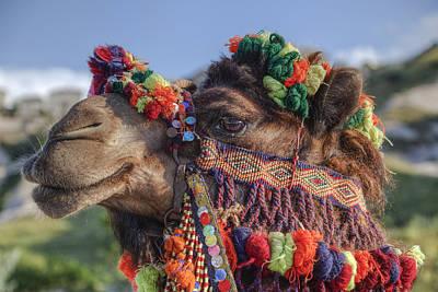 Camel Art Print by Joana Kruse