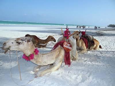 Camel On Beach Kenya Wedding4 Art Print