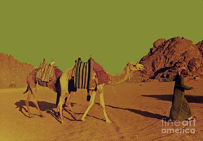 Photograph - Camel Ride by Elizabeth Hoskinson