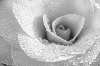 Photograph - Camellia Black And White by Andrea Anderegg