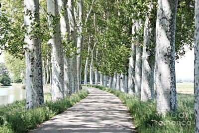 Photograph - Canal Du Midi by Cendrine Marrouat