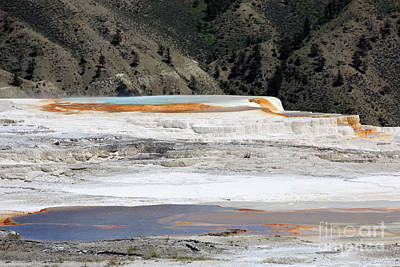 Canary Spring At Mammoth Hot Springs Upper Terraces Art Print by Louise Heusinkveld