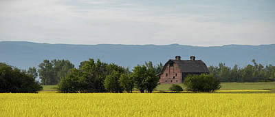 Photograph - Canola Field by Whispering Peaks Photography