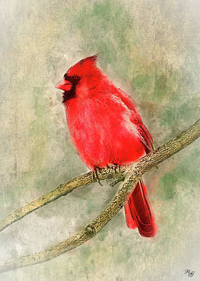 Digital Art - Bird Art - Cardinal by Ron Grafe