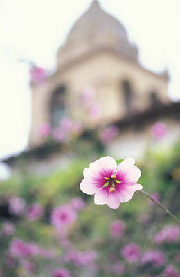 Carmel Mission With Flowers Art Print by Kathy Yates