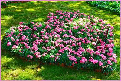 Photograph - Carnation Heart by Sonali Gangane