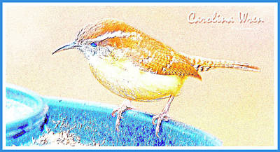 Carolina Wren, Winter Wren On Bird Feeder, Digital Art Art Print by A Gurmankin
