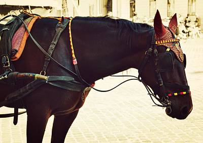 Photograph - Carriage Colors by JAMART Photography