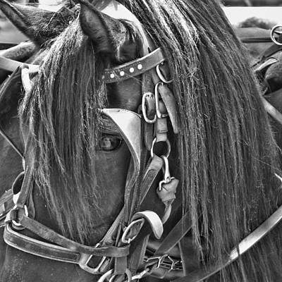 Photograph - Carriage Horse Ride by JAMART Photography