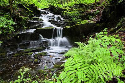 Photograph - Cascading Woodland Brook by Alan L Graham