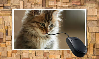 Animals Royalty-Free and Rights-Managed Images - Cat And Mouse Play by Marvin Blaine
