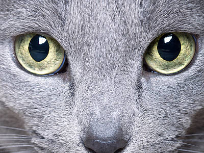 Nose Photograph - Cat Eyes by Nailia Schwarz