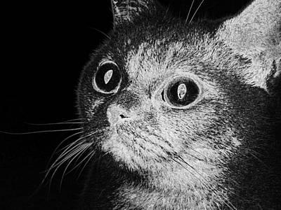 Digital Art - Cat Eyes View Face Animal Home  by PixBreak Art