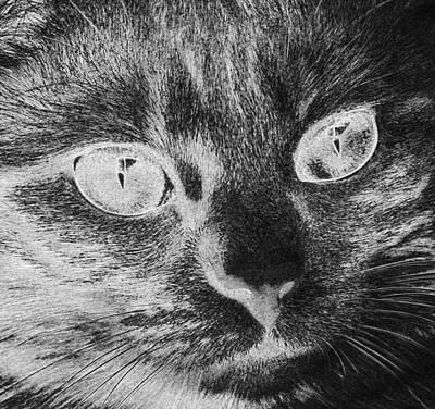 Digital Art - Cat Face Close View Eyes Portrait  by PixBreak Art