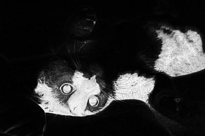 Digital Art - Cat Favorite Relaxation Rest  by PixBreak Art