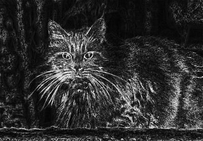 Digital Art - Cat Feline Cat Face Cat S Eyes  by PixBreak Art