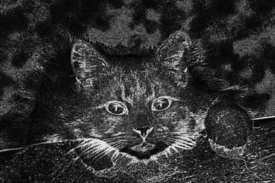 Digital Art - Cat Feline Furry Pet Close Up  by PixBreak Art