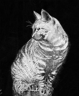 Digital Art - Cat Female Adidas Fur Mackerel  by PixBreak Art