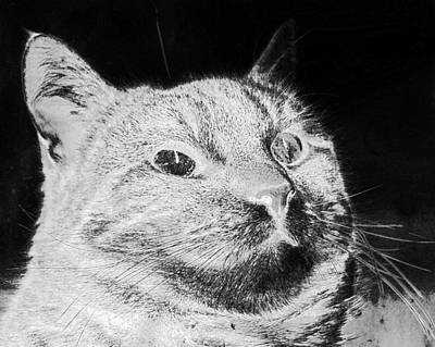 Digital Art - Cat Glass Green Eyes Moustache  by PixBreak Art