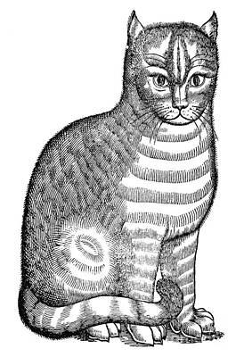 Photograph - CAT by Granger