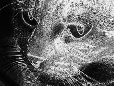 Digital Art - Cat Head Female Cat Face  by PixBreak Art