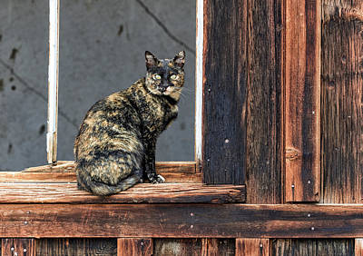Photograph - Cat In A Window by Scott Warner