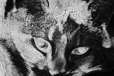Digital Art - Cat Macro Animal Fur Face Close  by PixBreak Art