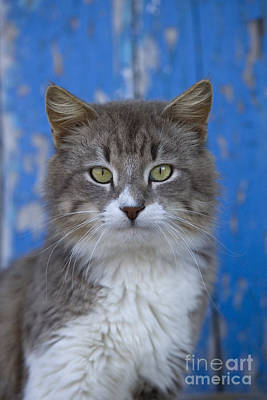 Gray Tabby Photograph - Cat On A Greek Island by Jean-Louis Klein & Marie-Luce Hubert