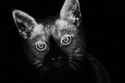 Digital Art - Cat Pet Animal Domestic Fur  by PixBreak Art