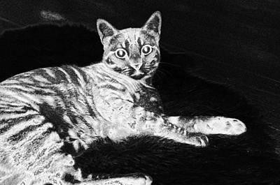 Digital Art - Cat Pet Eyes Animal Kitty  by PixBreak Art