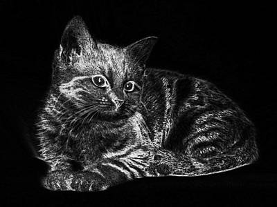 Digital Art - Cat Pet Striped Kitten Young  by PixBreak Art
