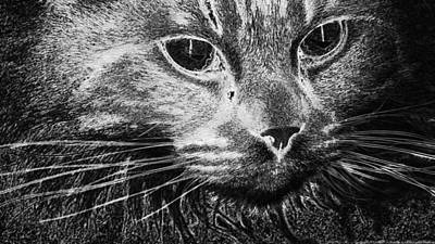 Digital Art - Cat Portrait Kitten Cute Animal  by PixBreak Art