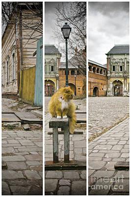 Photograph - Cat by Svetlana Batalina